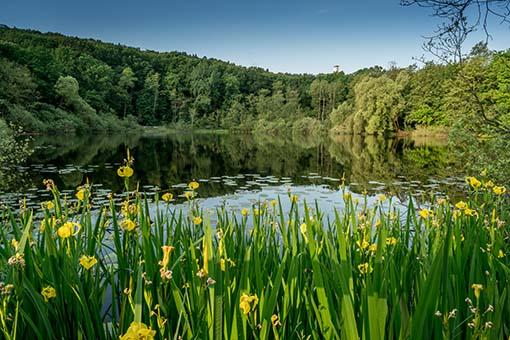 Wundervolle Wälder und See - Ausflugsziele Köpenick