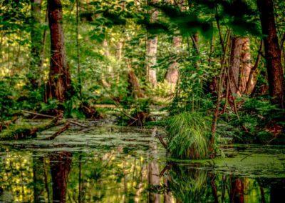 Naturschutzgebiet am Müggelsee